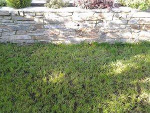 Sassi da muro vecchi pietra a vista di Luserna.